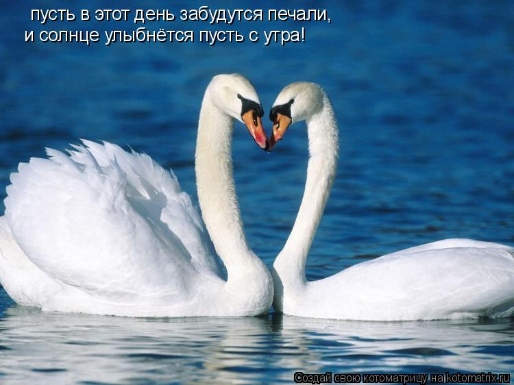 Котоматрица: пусть в этот день забудутся печали, и солнце улыбнётся пусть с утра!