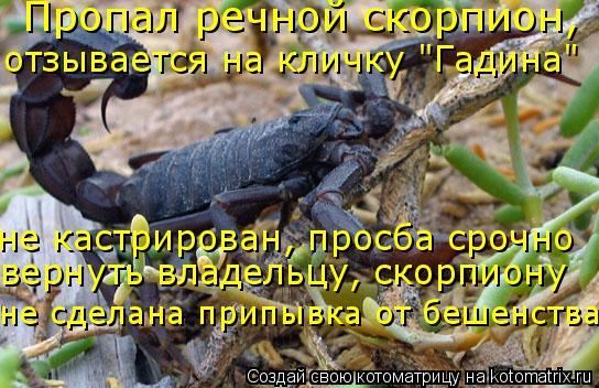 """Котоматрица: Пропал речной скорпион, отзывается на кличку """"Гадина"""" не кастрирован, просба срочно вернуть владельцу, скорпиону не сделана припывка от беш"""