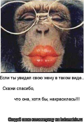 Котоматрица: Если ты увидел свою жену в таком виде... Скажи спасибо, что она, хотя бы, накрасилась!!!