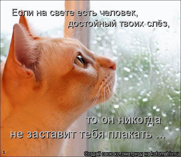 Котоматрица: Если на свете есть человек, достойный твоих слёз, то он никогда  не заставит тебя плакать ...