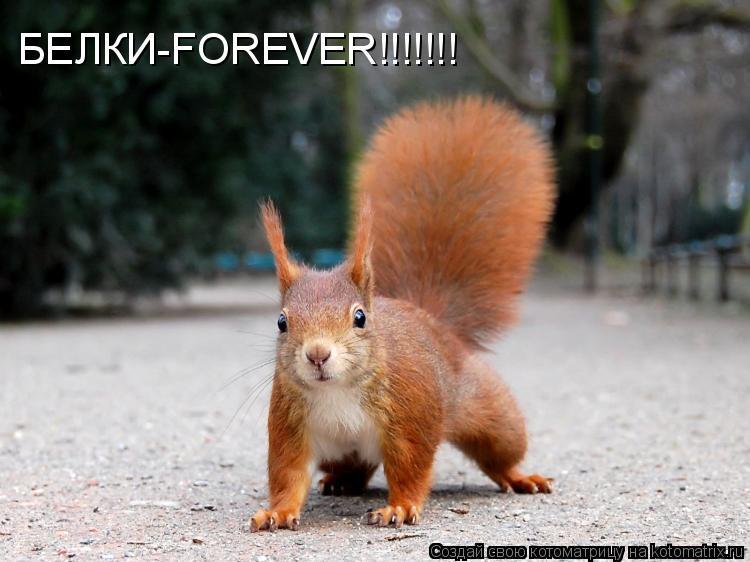 Котоматрица: БЕЛКИ-FOREVER!!!!!!!