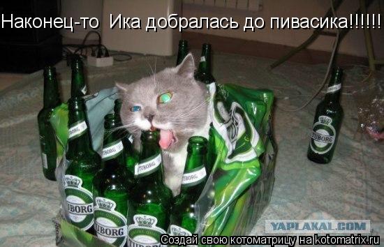 Котоматрица: Наконец-то  Ика добралась до пивасика!!!!!!