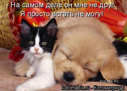 Котоматрица: - На самом деле он мне не друг... Я просто встать не могу!