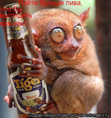 Котоматрица: Пейте больше пива,что бы выглядеть красиво! Пейте больше пива, что бы  выглядеть красиво!