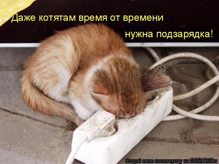 Котоматрица: Даже котятам время от времени нужна подзарядка!
