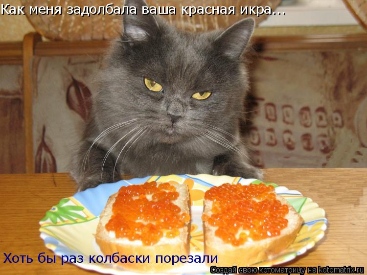 Котоматрица: Как меня задолбала ваша красная икра... Хоть бы раз колбаски порезали