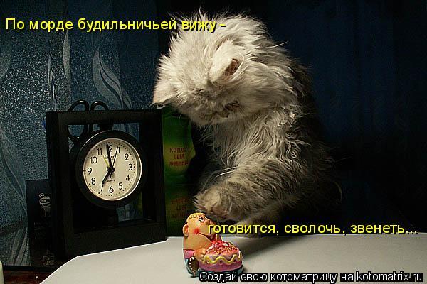 Котоматрица: готовится, сволочь, звенеть... По морде будильничьей вижу -
