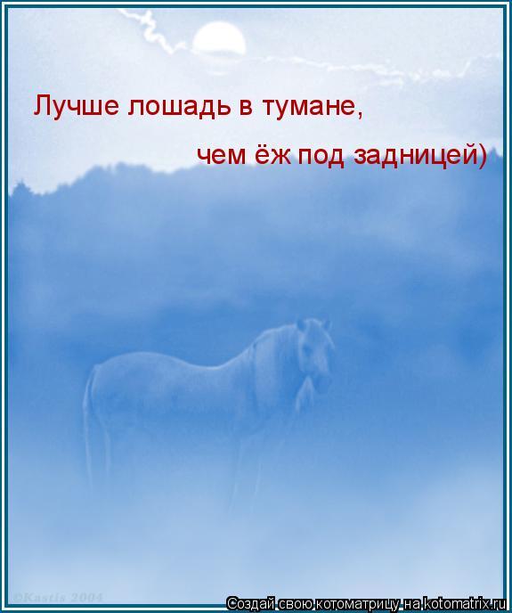 Котоматрица: чем ёж под задницей) Лучше лошадь в тумане,