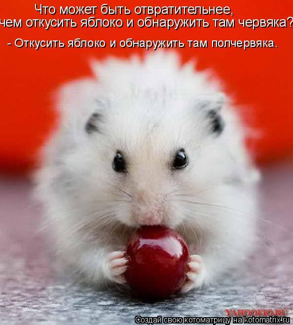 Котоматрица: Что может быть отвратительнее,  чем откусить яблоко и обнаружить там червяка?  - Откусить яблоко и обнаружить там полчервяка.