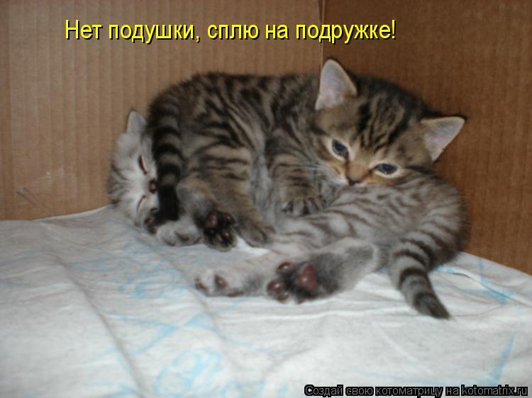 Котоматрица: Нет подушки, сплю на подружке!