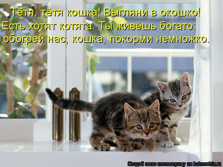 Котоматрица: Тётя, тётя кошка! Выгляни в окошко! Есть хотят котята. Ты живёшь богато: обогрей нас, кошка, покорми немножко.