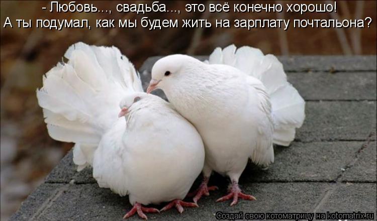 Котоматрица: - Любовь..., свадьба..., это всё конечно хорошо!  А ты подумал, как мы будем жить на зарплату почтальона?