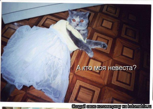 Котоматрица: А кто моя невеста? А кто моя невеста?