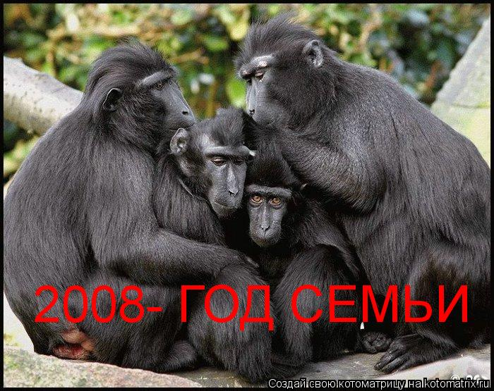 Котоматрица: 2008- ГОД СЕМЬИ