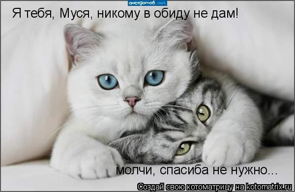 Котоматрица: Я тебя, Муся, никому в обиду не дам! молчи, спасиба не нужно...
