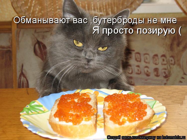 Котоматрица: Обманывают вас ,бутерброды не мне Я просто позирую (