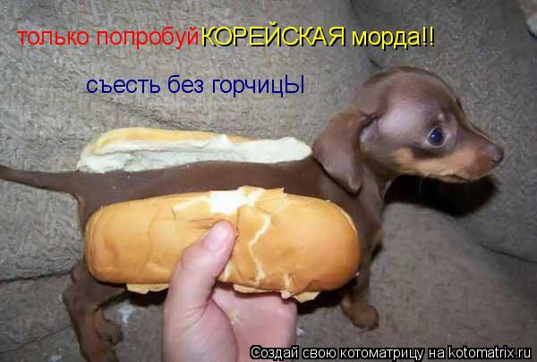 Котоматрица: только попробуй  КОРЕЙСКАЯ морда!! съесть без горчицЫ