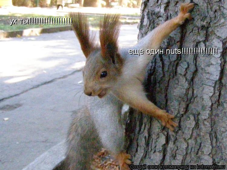 Котоматрица: ух ты!!!!!!!!!!!!!!!!!! ещё один nuts!!!!!!!!!!!!!!!