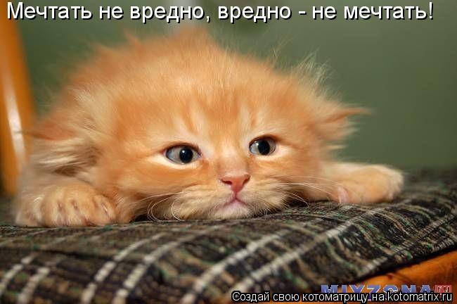 Котоматрица: Мечтать не вредно, вредно - не мечтать!