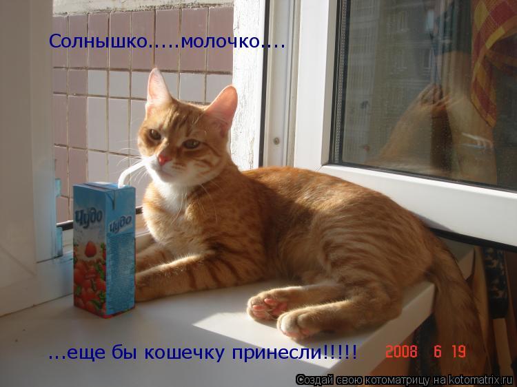 Котоматрица: Солнышко.....молочко.... ...еще бы кошечку принесли!!!!!