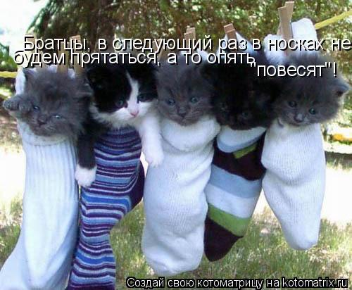 "Котоматрица: Братцы, в следующий раз в носках не прячимся! А то опят ""повесят""! будем прятаться, а то опять ""повесят""!"