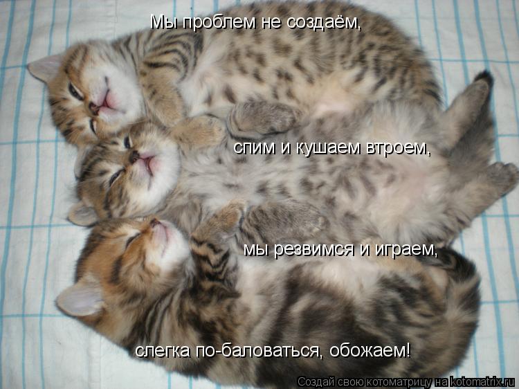 Котоматрица: Мы проблем не создаём, спим и кушаем втроем, мы резвимся и играем, слегка по-баловаться, обожаем!
