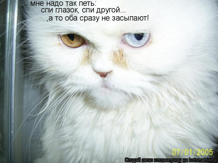 Котоматрица: мне надо так петь: спи глазок, спи другой... ,а то оба сразу не засыпают!