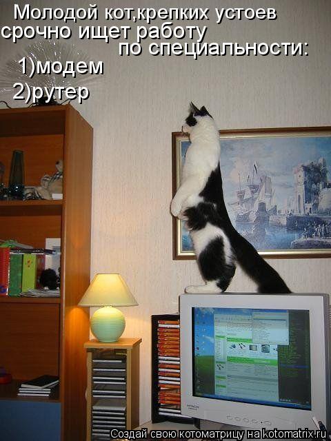 Котоматрица: Молодой кот,крепких устоев срочно ищет работу  по специальности: 1)модем 2)рутер