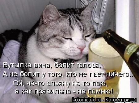 Котоматрица: Бутылка вина, болит голова, А не болит у того, кто не пьет ничего... Ой, чё-то спьяну не то пою,   а как правильно - не помню!