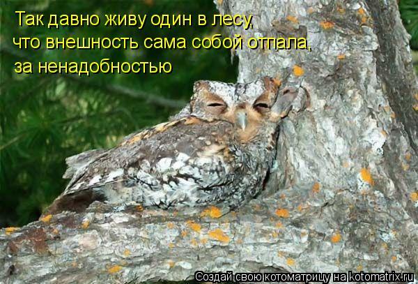 Котоматрица: Так давно живу один в лесу, что внешность сама собой отпала, за ненадобностью