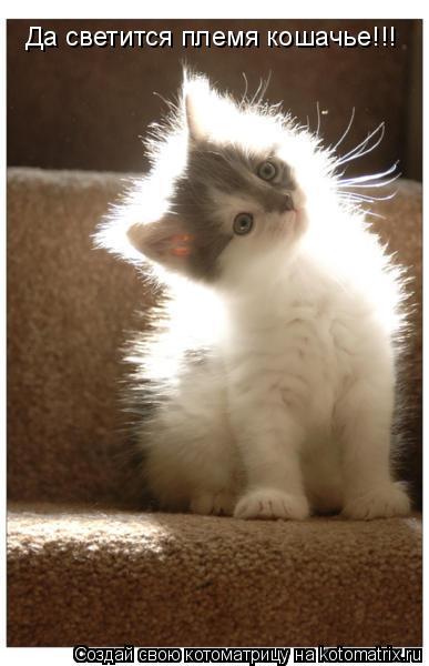 Котоматрица: Да светится племя кошачье!!!