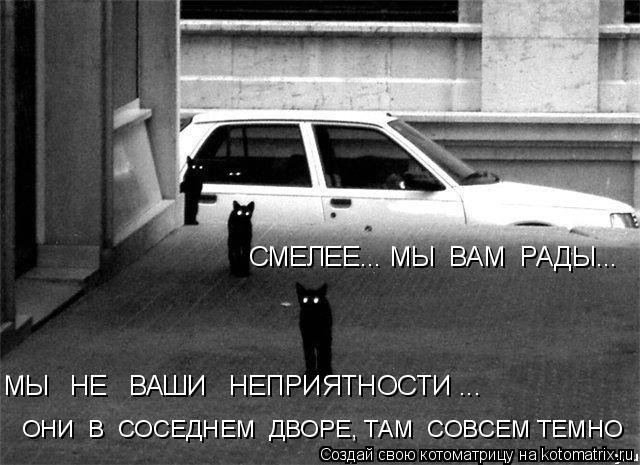 Котоматрица: СМЕЛЕЕ... МЫ  ВАМ  РАДЫ... МЫ   НЕ   ВАШИ   НЕПРИЯТНОСТИ ...  ОНИ  В  СОСЕДНЕМ  ДВОРЕ, ТАМ  СОВСЕМ ТЕМНО