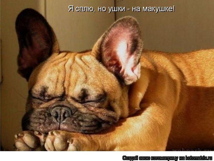 Котоматрица: Я сплю, но ушки - на макушке!