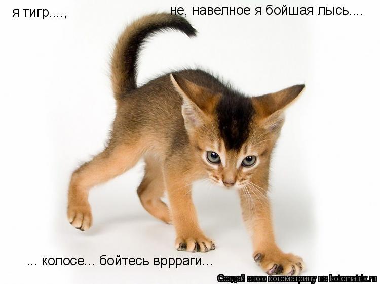 Котоматрица: я тигр...., не, навелное я бойшая лысь.... ... колосе... бойтесь вррраги...
