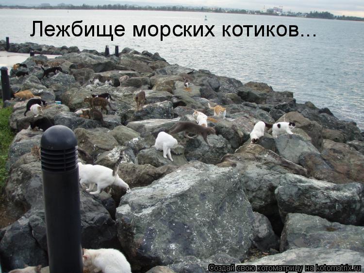 Котоматрица: Лежбище морских котиков...
