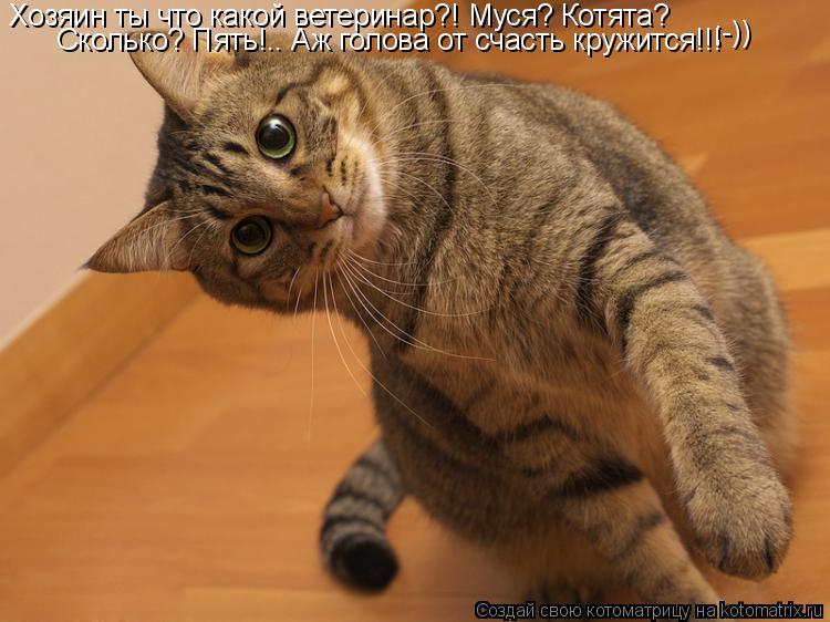 Котоматрица: Хозяин ты что какой ветеринар?! Муся? Котята?  Сколько? Пять!.. Аж голова от счасть кружится!!!  ;-))