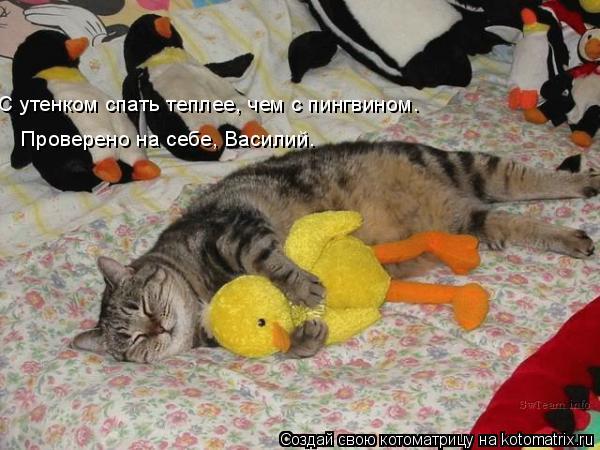 Котоматрица: Проверено на себе, Василий. С утенком спать теплее, чем с пингвином.