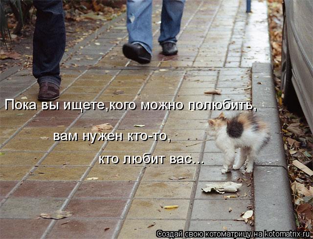 Котоматрица: Пока вы ищете,кого можно полюбить, вам нужен кто-то, кто любит вас...