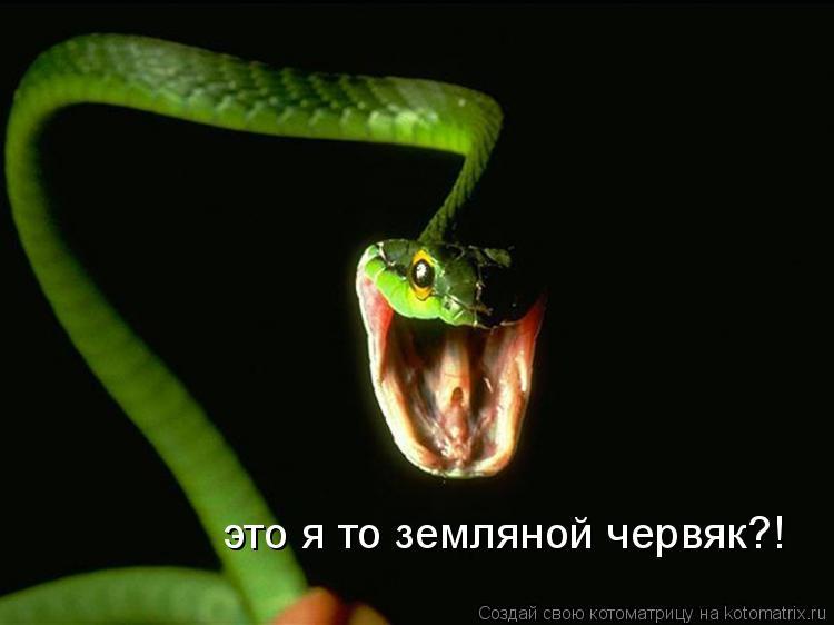 Котоматрица: это я то земляной червяк?!
