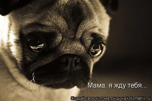 Котоматрица: Мама, я жду тебя...