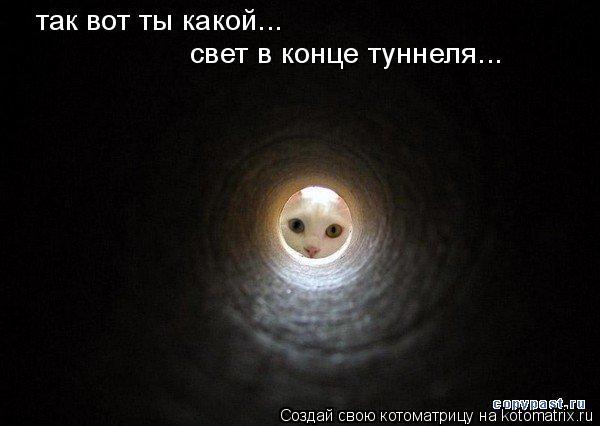 Котоматрица: так вот ты какой... свет в конце туннеля...