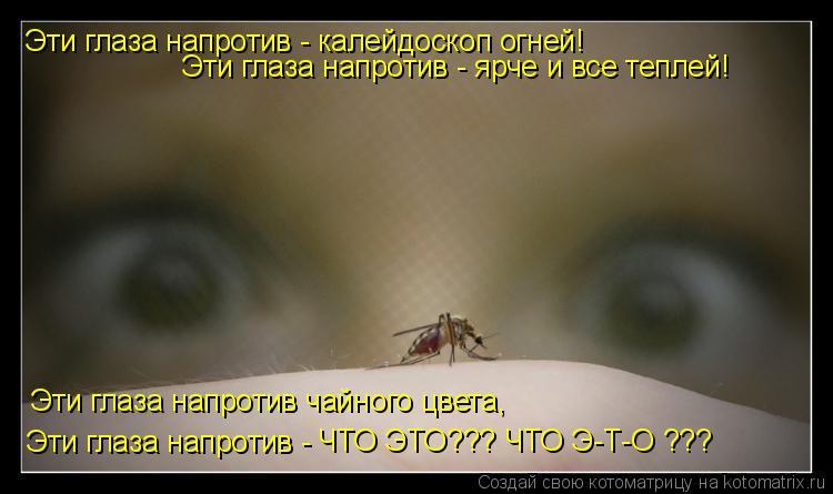 Котоматрица: Эти глаза напротив чайного цвета, Эти глаза напротив - Эти глаза напротив - калейдоскоп огней! Эти глаза напротив - ярче и все теплей! ЧТО ЭТО?