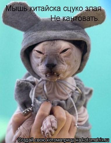 Котоматрица: Мышь китайска сцуко злая.  Не кантовать.