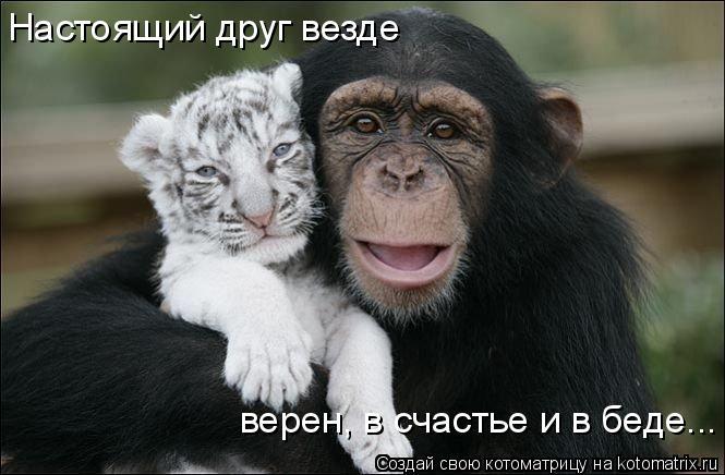 Котоматрица: Настоящий друг везде верен, в счастье и в беде...