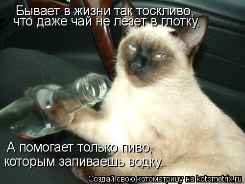 Котоматрица: Бывает в жизни так тоскливо,   что даже чай не лезет в глотку,   А помогает только пиво,  которым запиваешь водку.