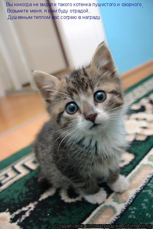 Котоматрица: Вы никогда не видали такого котенка пушистого и озорного Возьмите меня, я вам буду отрадой,  Душевным теплом вас согрею в награду . ,