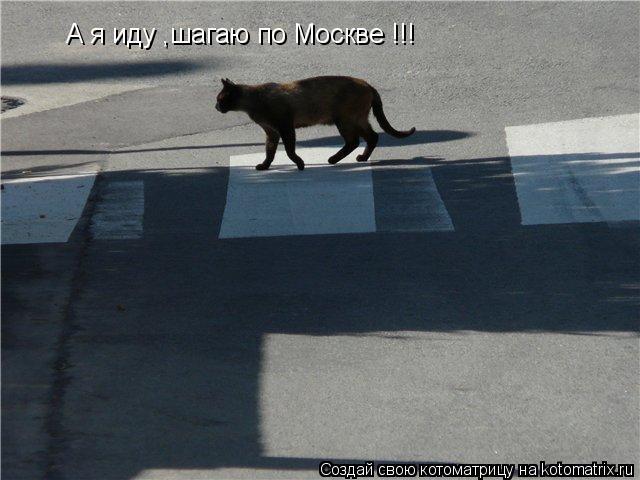 Котоматрица: А я иду ,шагаю по Москве !!!