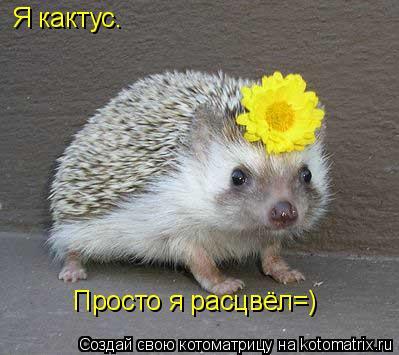Котоматрица: Я кактус. Просто я расцвёл=)
