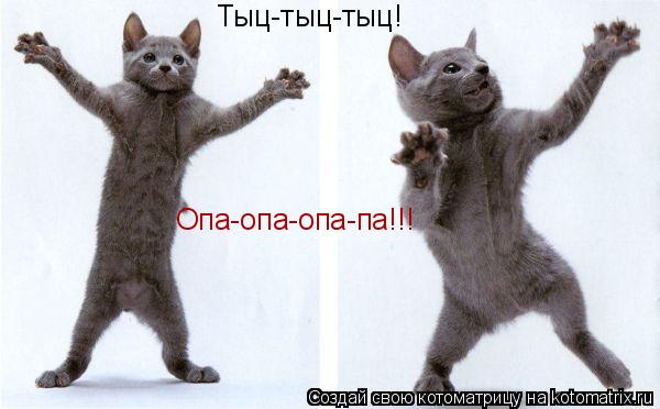 Котоматрица: Тыц-тыц-тыц! Опа-опа-опа-па!!!