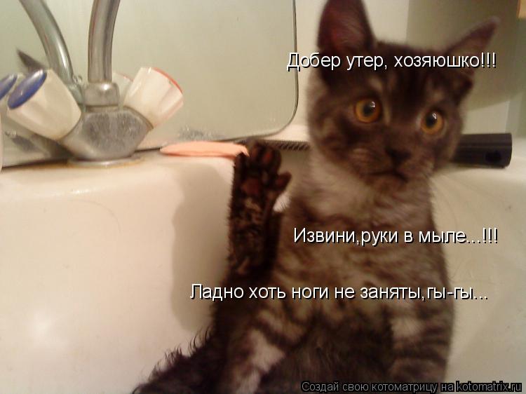 Котоматрица: Добер утер, хозяюшко!!! Извини,руки в мыле...!!! Ладно хоть ноги не заняты,гы-гы...